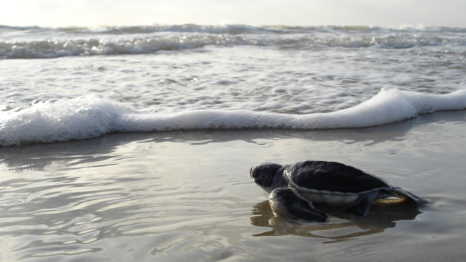 <h4>OUR OCEANS</h4><h5>Goal: We must defend our oceans, marine wildlife and beaches by stopping new offshore drilling and more.</h5><em>NPS Photo</em>